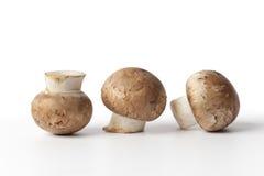 Cogumelos frescos da castanha Imagem de Stock