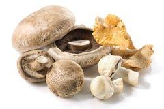 Cogumelos frescos da floresta Isolado no branco Fotos de Stock