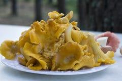 Cogumelos frescos da prima Imagem de Stock Royalty Free
