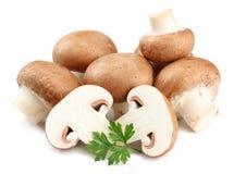 Cogumelos frescos do cogumelo isolados no fundo branco Foto de Stock Royalty Free
