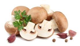 Cogumelos frescos do cogumelo isolados no fundo branco Fotos de Stock Royalty Free