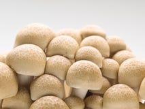Cogumelos frescos do shimeji Foto de Stock