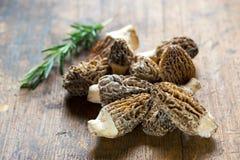 Cogumelos frescos dos Morels Fotografia de Stock