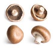Cogumelos frescos isolados no fundo branco. fotos de stock royalty free