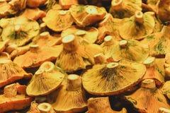 Cogumelos frescos, mercado em Barcelona imagem de stock