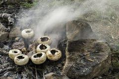 Cogumelos grelhados no carvões na natureza imagem de stock royalty free