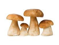 Cogumelos isolados em um fundo branco Fotografia de Stock Royalty Free