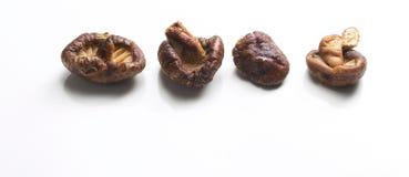Cogumelos japoneses imagem de stock