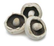 Cogumelos lisos Fotos de Stock Royalty Free
