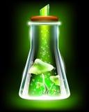 cogumelos mágicos com poção na garrafa do laboratório Fotos de Stock