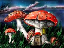 Cogumelos mágicos Foto de Stock