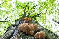 Cogumelos na árvore Foto de Stock