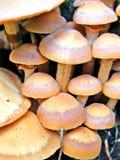 Cogumelos na árvore do coto Fotos de Stock Royalty Free
