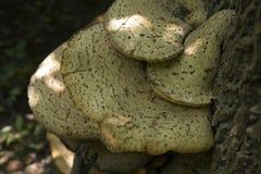 Cogumelos na árvore inoperante fotos de stock