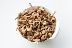 Cogumelos na bacia Fotografia de Stock