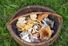Cogumelos na cesta Imagem de Stock Royalty Free