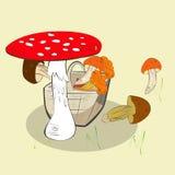 Cogumelos na cesta Foto de Stock