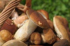 Cogumelos na cesta Fotografia de Stock