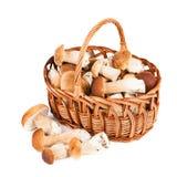 Cogumelos na cesta Imagens de Stock Royalty Free