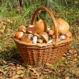 Cogumelos na cesta Fotografia de Stock Royalty Free