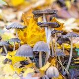 Cogumelos na floresta fotografia de stock royalty free