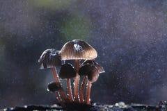 Cogumelos na floresta Fotos de Stock