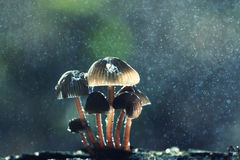 Cogumelos na floresta Imagens de Stock