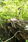 Cogumelos na floresta fotos de stock royalty free