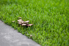 Cogumelos na grama Imagens de Stock Royalty Free