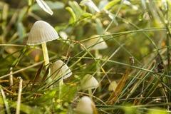 Cogumelos na luz do nascer do sol Fotos de Stock Royalty Free