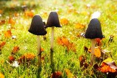 Cogumelos na luz solar Fotografia de Stock