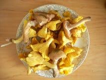 Cogumelos na placa Imagens de Stock Royalty Free