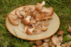 Cogumelos na placa Fotos de Stock Royalty Free