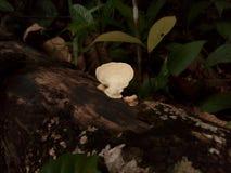 Cogumelos na planta selvagem foto de stock