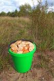 Cogumelos no balde Imagem de Stock