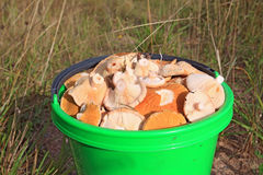 Cogumelos no balde Foto de Stock Royalty Free