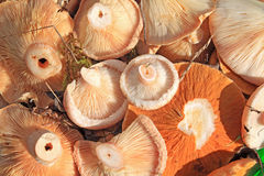 Cogumelos no balde Imagens de Stock