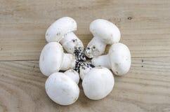 Cogumelos no círculo sobre a madeira do olmo Fotos de Stock