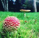 Cogumelos no jardim Fotografia de Stock