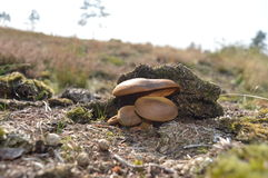 Cogumelos no outono imagem de stock