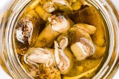 Cogumelos no petróleo Foto de Stock Royalty Free