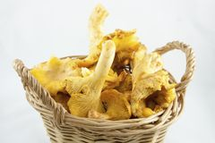 Cogumelos no punnet Foto de Stock Royalty Free