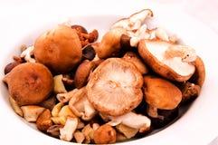 Cogumelos orgânicos Imagem de Stock