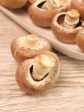 Cogumelos orgânicos Foto de Stock