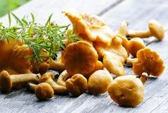 Cogumelos orgânicos Fotografia de Stock Royalty Free