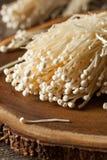 Cogumelos orgânicos crus de Enoki Foto de Stock