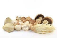 Cogumelos orgânicos das sortes misturadas da pilha. Imagem de Stock