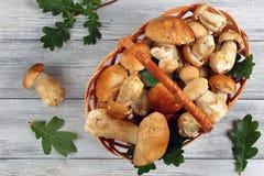 Cogumelos orgânicos do boleto na cesta de vime Fotos de Stock