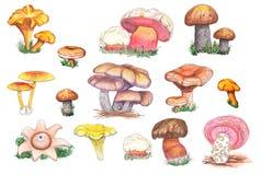 Cogumelos originais comestíveis e do fungo ilustração do vetor