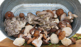 Cogumelos para a venda Imagem de Stock Royalty Free